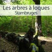 arbres à loques dans la forêt de Stambruges en belgique reportage Nord Découverte