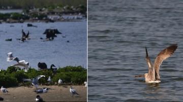 oiseaux-cinq-tailles-thumeries-nord-decouverte