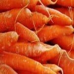 carottes-marche-saison-nord-decouverte