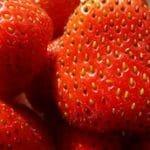 fraise-marche-saison-nord-decouverte