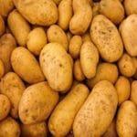 pomme-de-terre-marche-saison-nord-decouverte