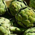 artichaut-saison-nord-decouverte