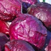 chou-rouge-legume-fruit-saison-nord-decouverte
