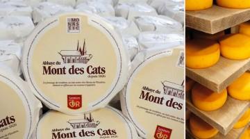 fromage-mont-de-cats-nord-decouverte.