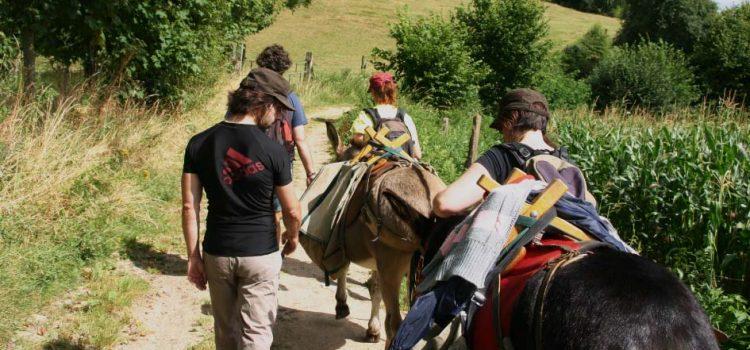 une idée de promenade insolite découvrir le Mont des Cats avec des ânes