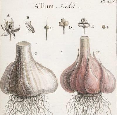 ail-arleux-gravure-nord-decouverte