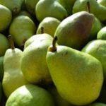 poire-fruit-legume-saison-nord-decouverte