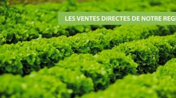 salades-vente-directe-nord-pas-de-calais-decouverte