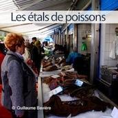 mini-etal-de-poissons-boulogne-sur-mer-nord-decouverte