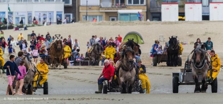 L'arrivée sur la plage des pêcheurs de crevettes à cheval à coxyde oostduinkerke reportage Nord Découverte