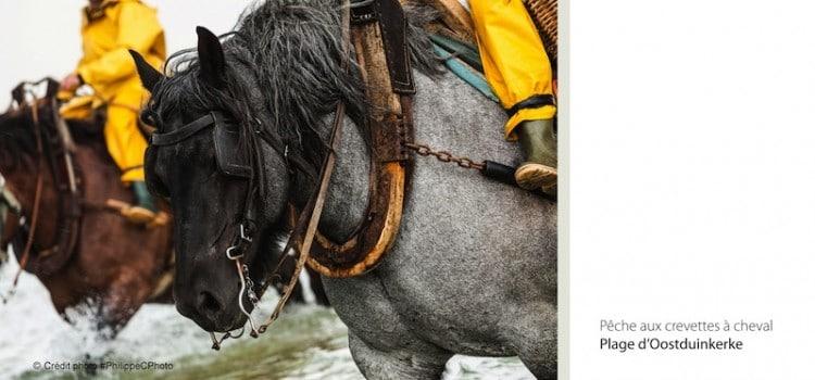 Gros plan sur le brabançon utilsé par les pêcheurs de crevettes à cheval à coxyde oostduinkerke reportage Nord Découverte