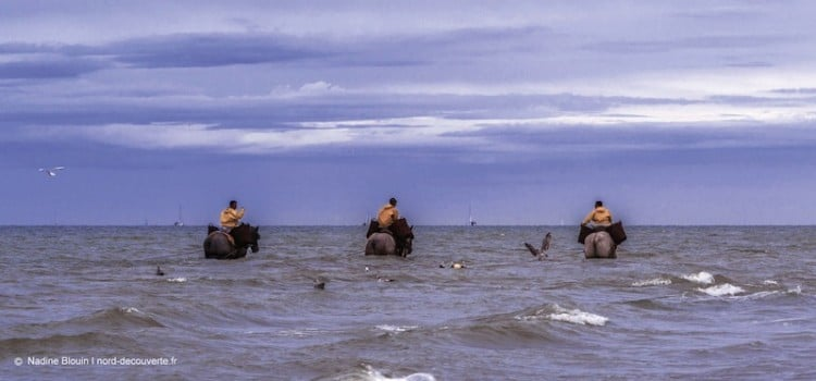 vue des pêcheurs de crevettes à cheval à coxyde oostduinkerke loin en mer avec leurs chevaux reportage Nord Découverte