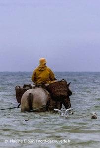 entrée dans la mer d'un pêcheur de crevette et son cheval sur la plage de oostduinkerke à coxyde en Belgique