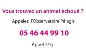 numero-telephone-animal-echoue-nord-decouverte