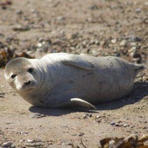 Photo d'un phoque se prélassant à terre par Nord Découverte