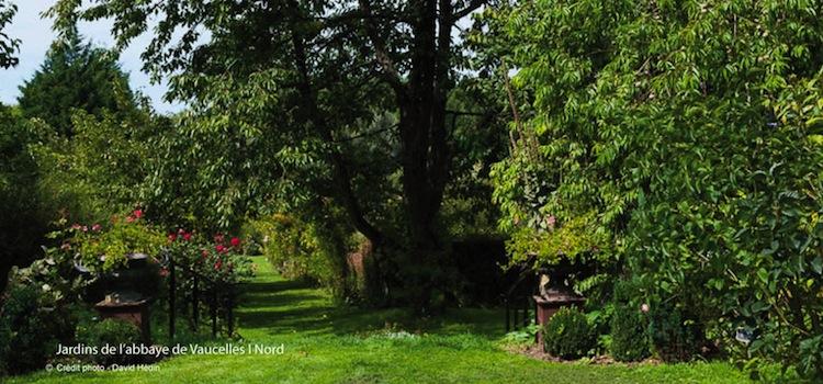 jardins-allee-abbaye-de-vaucelles-nord-decouvert