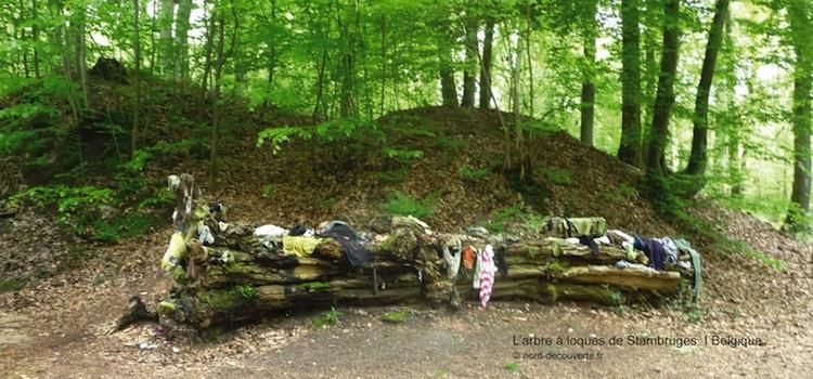 l'ancien arbre à loques qui se trouvent vers la chapelle del'Ercompuch à Stambruges tombé en 2009