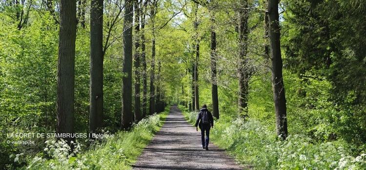 allée de promenade dans la forêt de Stambruges
