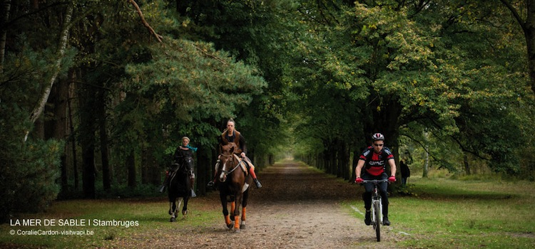 la forêt de Stambruges offre de nombreux sentiers de promenade pour les piétons, les cavaliers et les vététistes