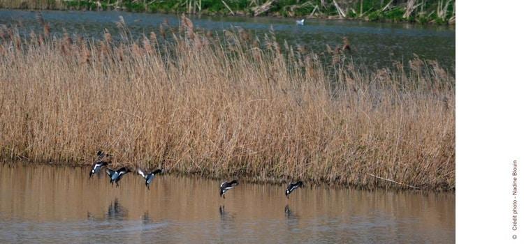 envol site ornithologique des cinq tailles