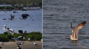 les oiseaux du site ornithologique des cinq tailles