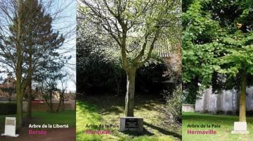 arbres de la liberté