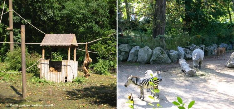 zoo-citadelle-Vauban-lille-nord-decouverte