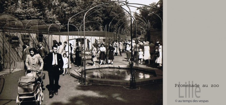 zoo-retro-50-lille-nord-decouverte