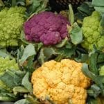 chou-fleur-couleur-saint-omer-nord-decouverte
