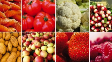 fruits-legumes-vente-directe-nord-decouverte