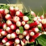 radis-marche-saison-nord-decouverte