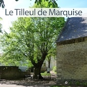 tilleul-marquise-arbre-ramarquable1