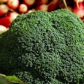 brocoli-saison-nord-decouverte