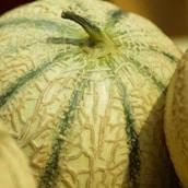 melon-saison-nord-decouverte