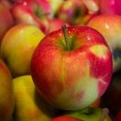 pomme-legume-fruit-saison-nord-decouverte