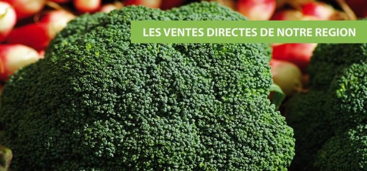 brocolis-vente-directe-nord-pas-de-calais-decouverte