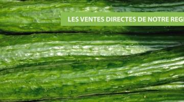 concombre-vente-directe-nord-pas-de-calais-decouverte.j