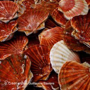 coquille-saint-jacques-etals-poissons-boulogne-sur-mer-nord-decouverte