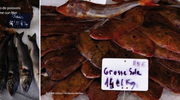 etals-poissons-boulogne-sur-mer-nord-decouverte