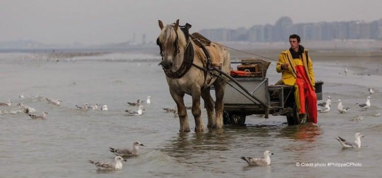 vue d'un des pêcheurs de crevettes à cheval à coxyde oostduinkerke reportage Nord Découverte