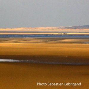 Vue de La Baie de Somme où se trouvent la plus grande colonie de phoques et veaux marins