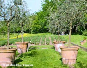 jardin-olivier-mosaic-jardin-des-culture-Houplin-Ancoisne-nord-decouverte