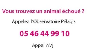 numero-telephone-animal-echoue-nord-decouverte
