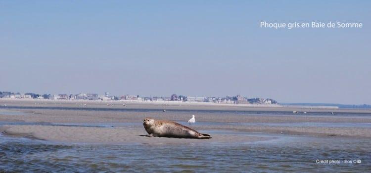 phoques sur un banc de sable en Baie de Somme