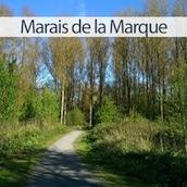 marais-de-la-marque-peronne-en-melantois-nord-decouverte