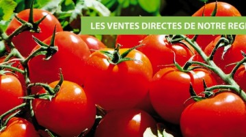 tomates-en-direct-producteur-nord-decouverte