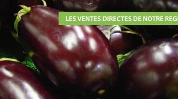 aubergine-en-direct-producteurs-nord-decouverte