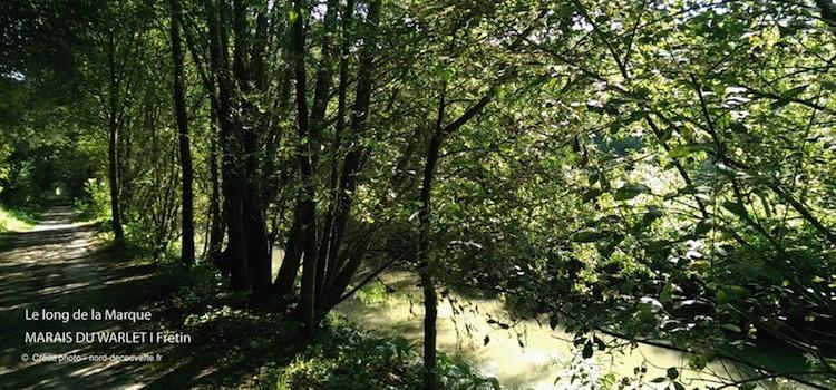la Marque longe une partie des marais de Fretin