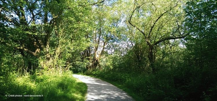 sentier-marais-de-fretin-nord-decouverte