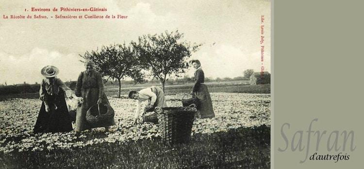 safran-du-gatinais-nord-decouverte
